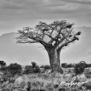 A large Baobab tree near the stunning lake Jipe