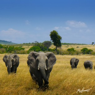 Small elephant family heading straight towards our lookout post