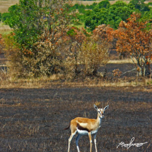 Fires on the savanna