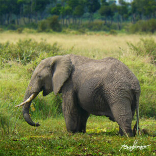 Elephant standing in the Musiara Swamp