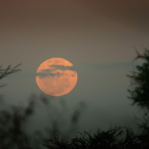 The moon rising over the savanna