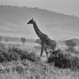 Early morning, the Mara escarpment as a magnificent backdrop