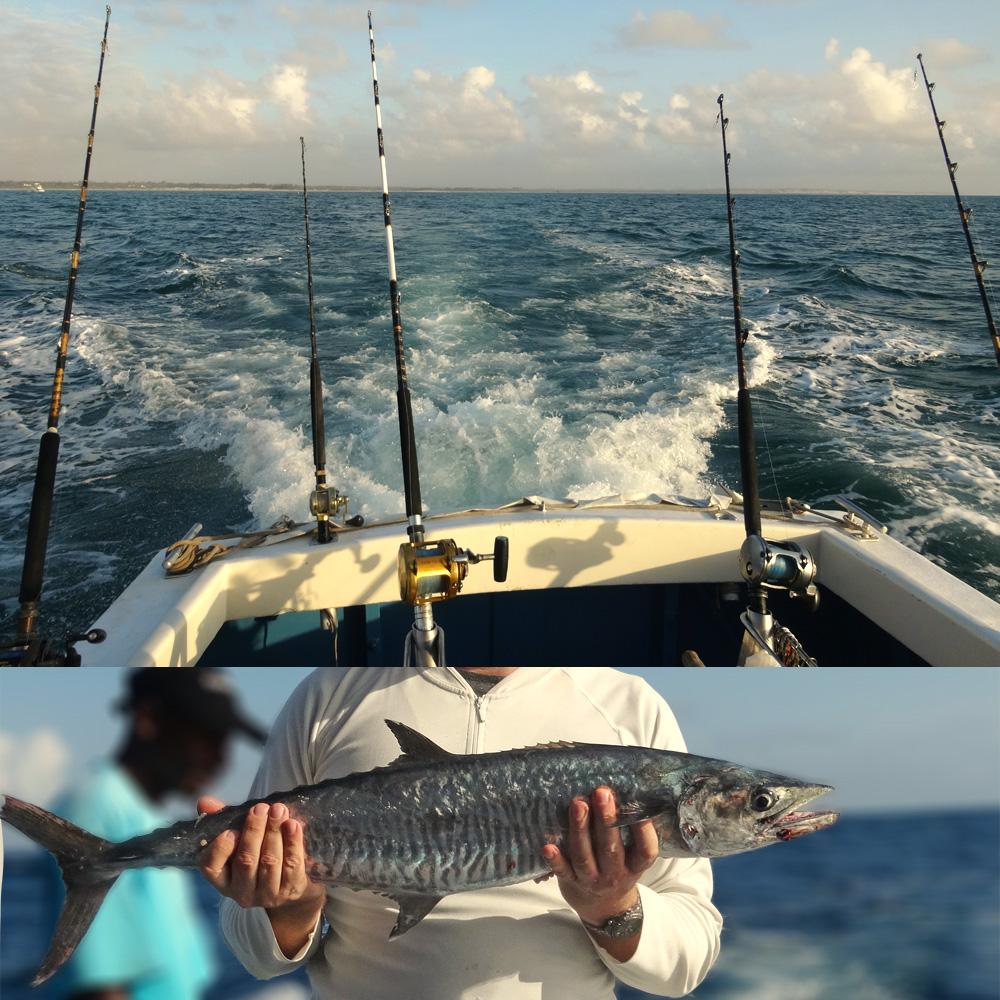 Beautiful Kingfish