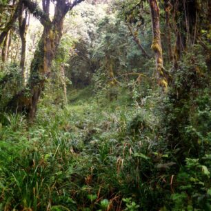 rain-forest-kilimanjaro-1.jpg