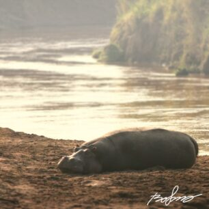 IMG_2354-hippo