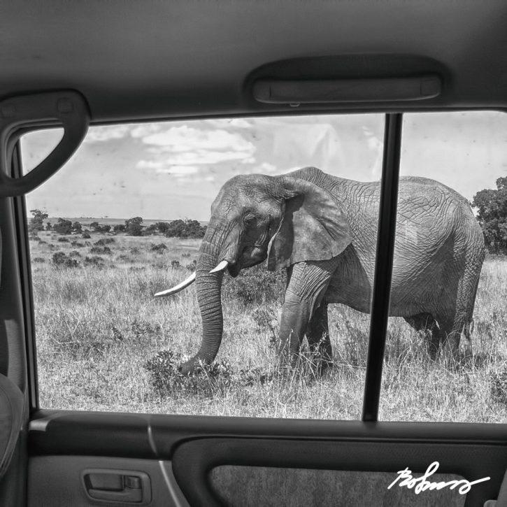 elephant-car-148