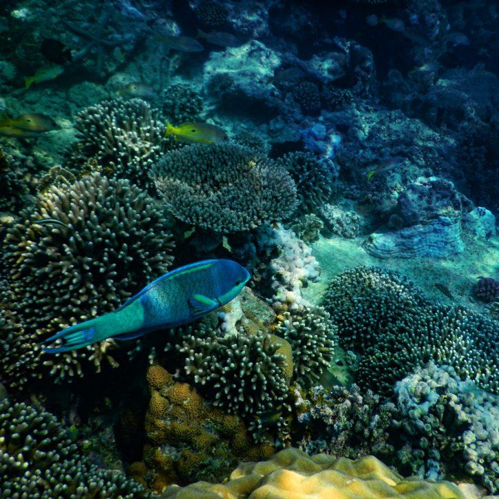 underwater-small-b2-new